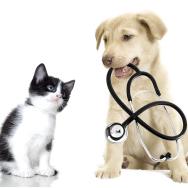 Animal Education
